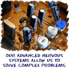 Our advanced nervous system allows us to solve complex problems.