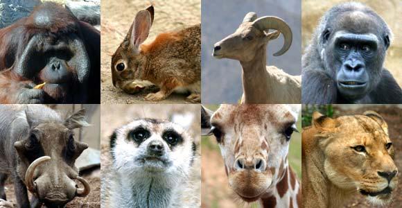 Examples of mammal species