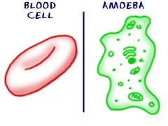 Cells have different components.
